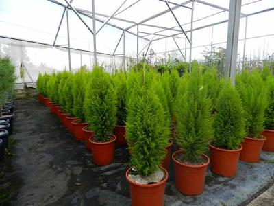 Vivero de plantas centro de jardiner a espacio verde for Viveros de plantas