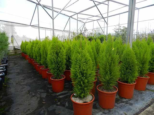 Vivero de plantas centro de jardiner a espacio verde for Centro de jardineria
